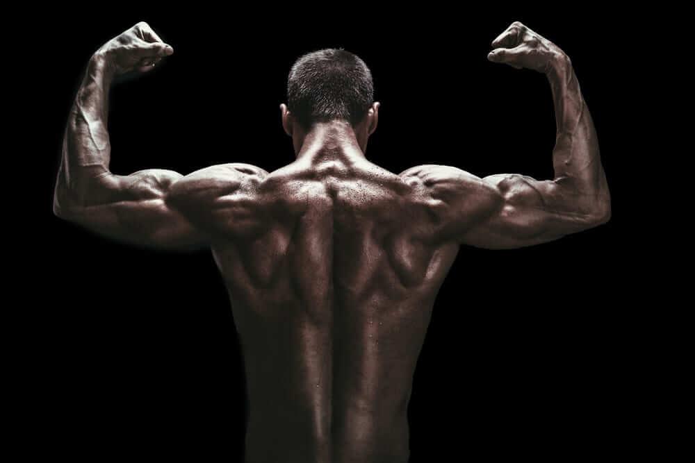 как сжигать жир а не мышцы