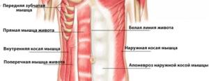 мышцы кора