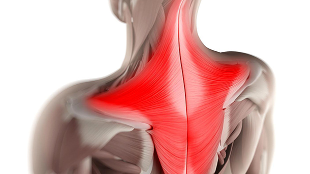 Strong-traps-healthy-shoulders